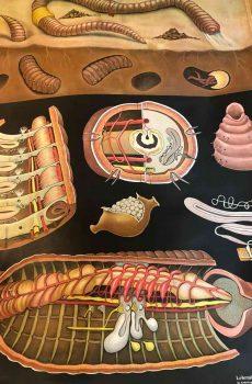 Brocante schoolplaat worm 2